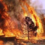 Portugal loita por terceiro dia consecutivo contra o lume que afecta o centro do país