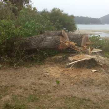 Que sentido ten esta demouca de árbores en Cedeira?