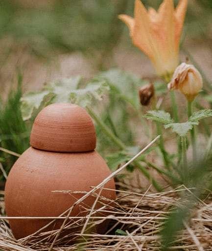 ollas-a-planter-sabeur-brut-courgette-face-constant-couteille