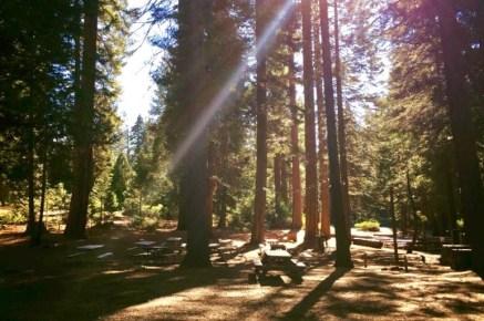 Camp Sylvester (credit: Reid Spice)