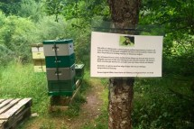 Park beehives