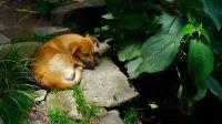 43 machu picchu hike dog