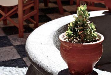 68 arequipa succulent