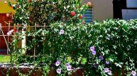 69 arequipa flowers