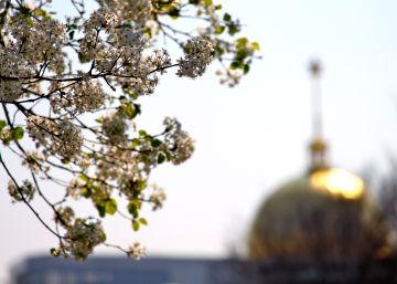 16 cherry blossom synagogue