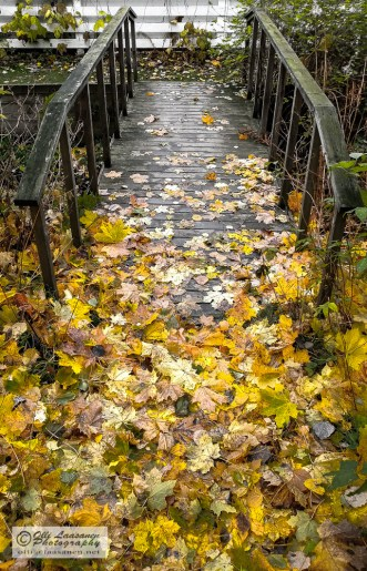 The fallen leaves are blogging my way.