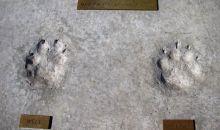 Μάθε την αληθινή ιστορία των χάσκι της Ανταρκτικής