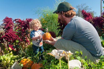 Pumpkin picking at a Community Garden in Kamloops