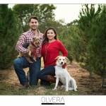 Couples Portraits At Christmas Tree Farm Olvera Photography San Antonio Photographer