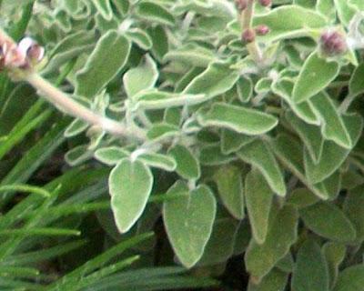 Πλήρης κατάλογος βοτάνων και οι θεραπείες τους Δείτε ποιες ασθένειες θεραπεύει κάθε βότανο