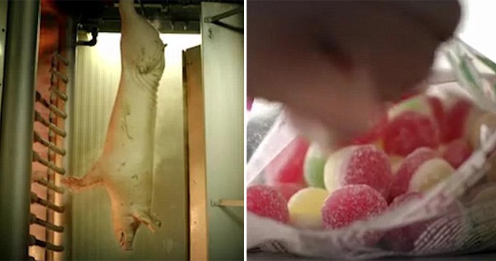 Μόλις δείτε πώς φτιάχνεται η ζελατίνη, μάλλον δεν θα ξαναγγίξετε ζελεδάκια και ζαχαρωτά