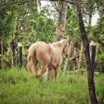 Itinéraire en Rép. dominicaine : Higüey et ses chevaux