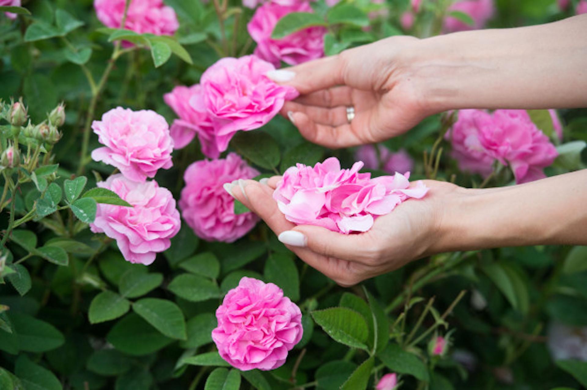 L'eau de rose, must have de votre trousse beauté
