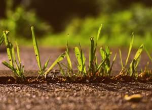 se débarrasser des mauvaises herbes dans le gazon