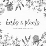 Free Hand Drawn Herbs & Plants Vector Graphics  (8 Elements, AI)