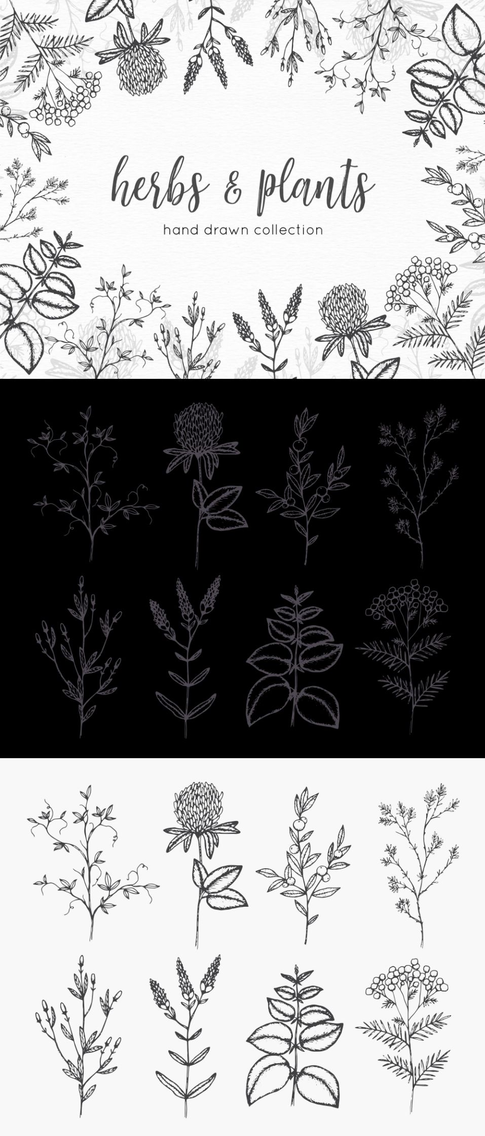 Free Hand Drawn Herbs and Plants Vector Graphics
