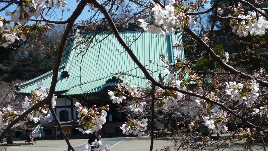鎌倉・光明寺◆境内散歩◆