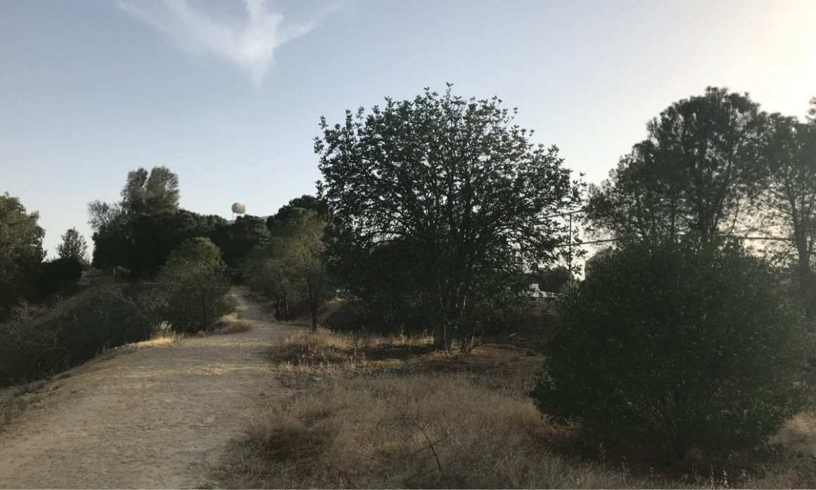Nicosia Alsos Forest