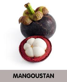 MANGOUSTAN-2.jpg