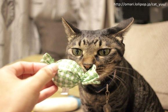 キャンディ型おもちゃのニオイをかぐキジトラ猫のゆう