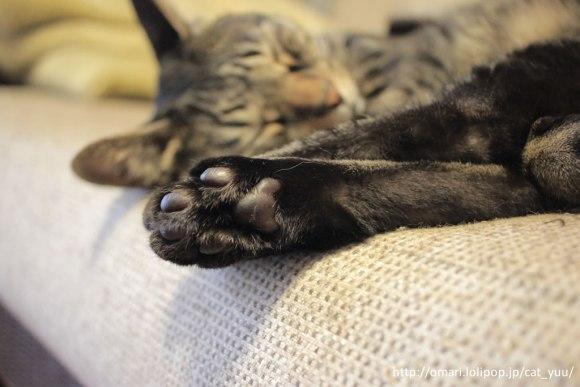 キジトラ猫のゆうの足の肉球❤️
