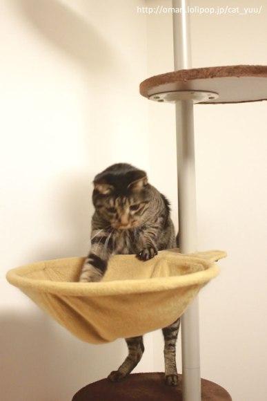 落ちたボールを探すキジトラ猫のゆう