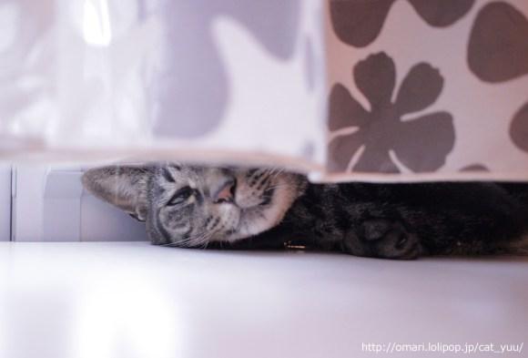 窓辺でまどろむキジトラ猫のゆう