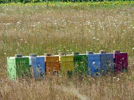 ruches multicolores