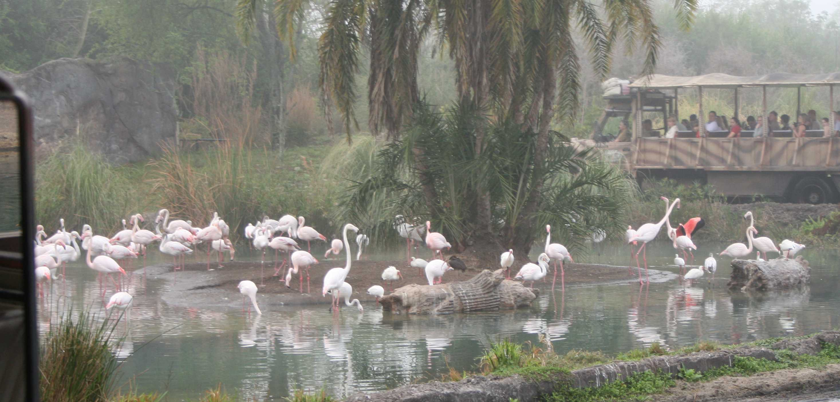 img_0135-flamingos-with-car