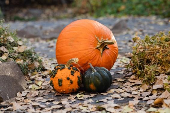 pumpkin arrangement