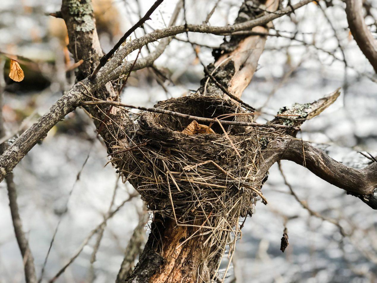 Nest in backyard habitat garden