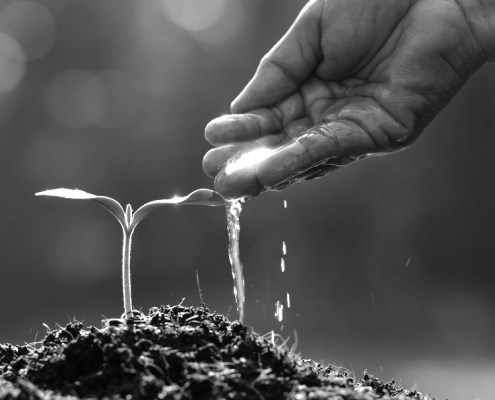 hand dripping water onto plant