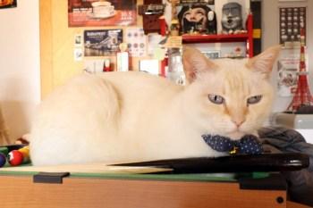《嘉義貓咪咖啡》Chu Cafe|近蘭潭風景區的日式雜貨風,暖食咖啡店貓萌