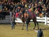 Camels2015P