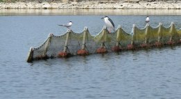 two-terns-and-a-night-heron