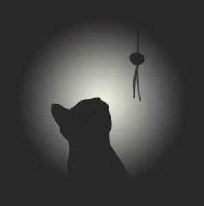 sombras-gatos