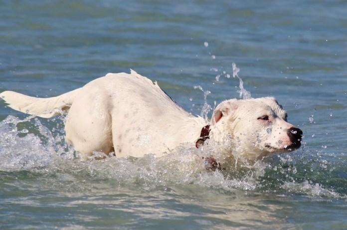 cao nadar