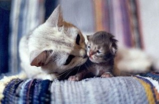 mother_and_kitten_15