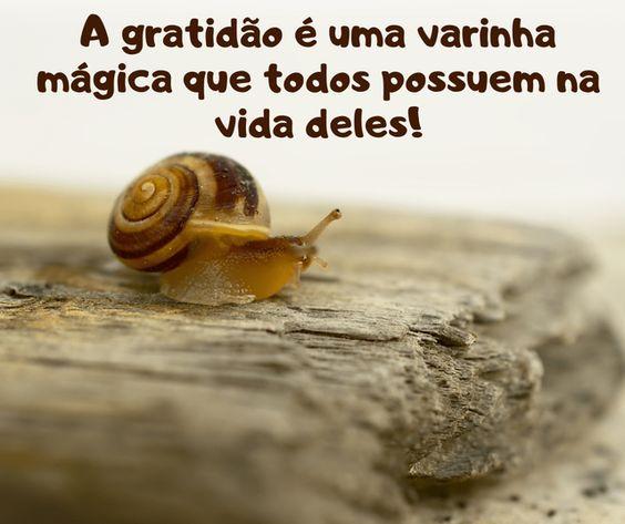 Frases top de gratidão é tudo!