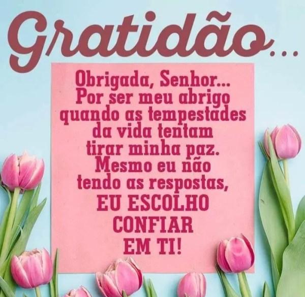 obrigada frases da gratidão vida