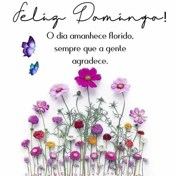 O dia amanhece florido