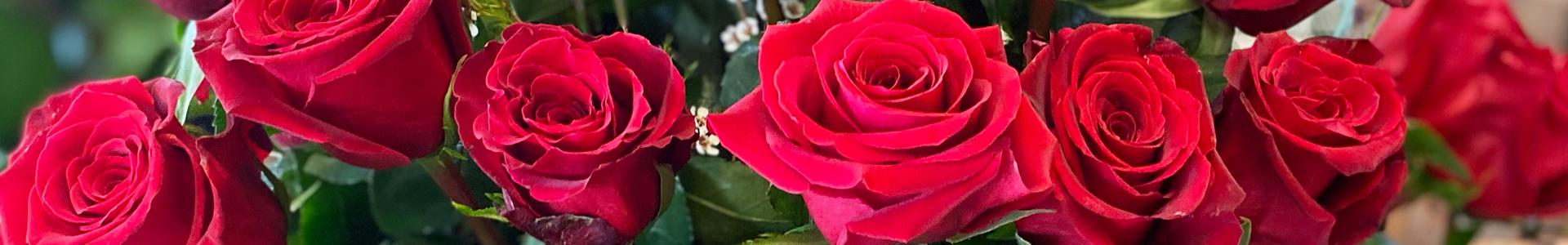 Roses Header