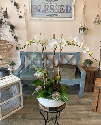 5 Stem Orchid Planter