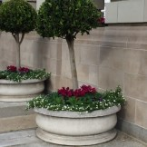 Topiary Pots at Ritz Carlton San Francisco Entrance