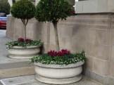 Topiary Pots at Ritz Carlton San Francisco Entrance