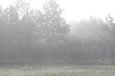 Утренние туманы...