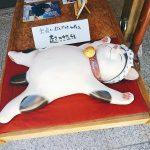 結婚相談所奈良、猫