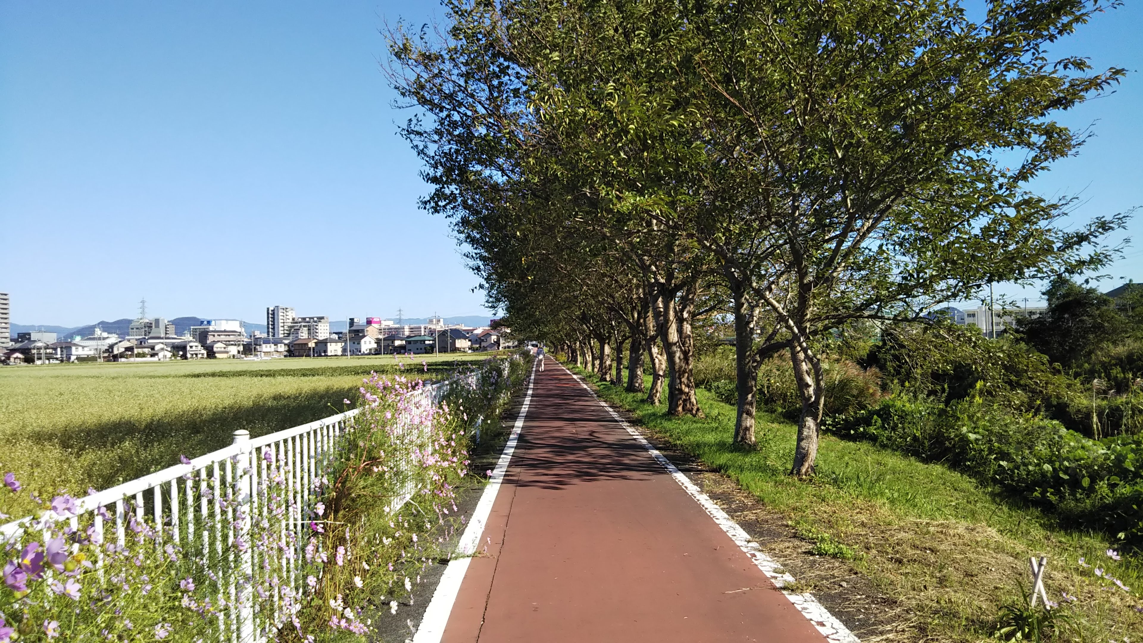 白鳥川_サイクリングロード