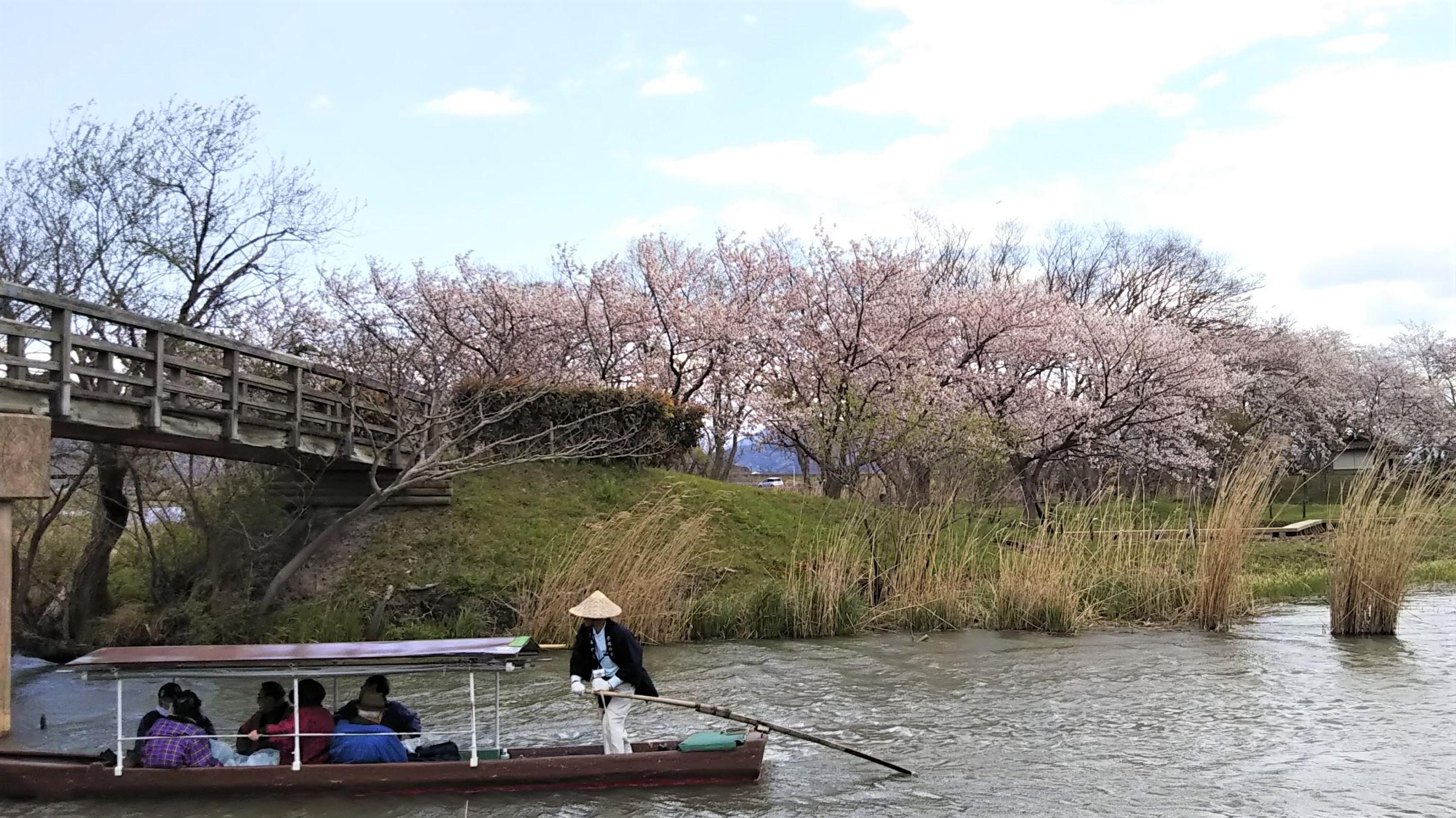 桜咲く『西の湖園地』