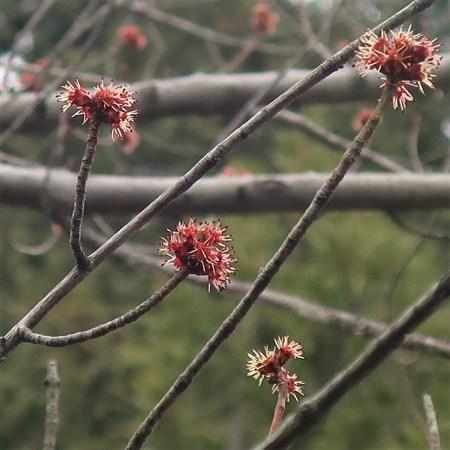 長光寺(花の木)